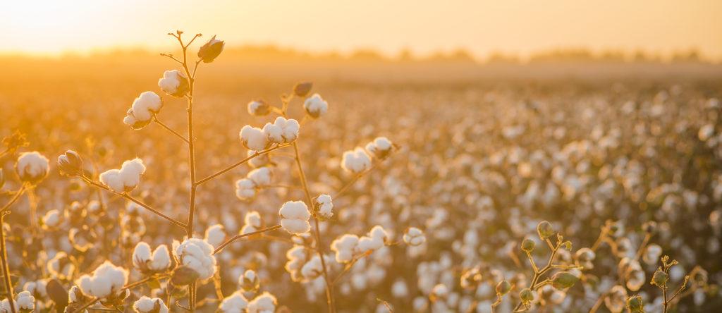 Cotton Slider